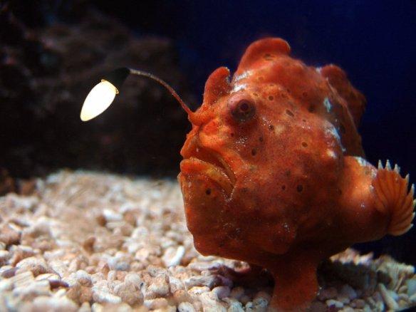 Gluehbirnen-Fisch