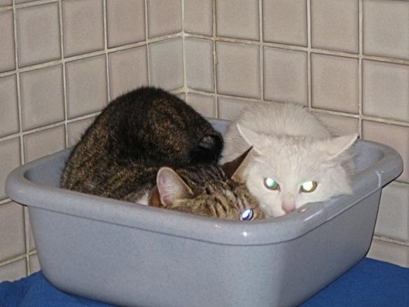 Feige Katzen geschaerft