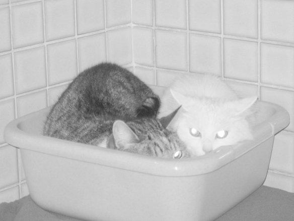 Feige Katzen LAB