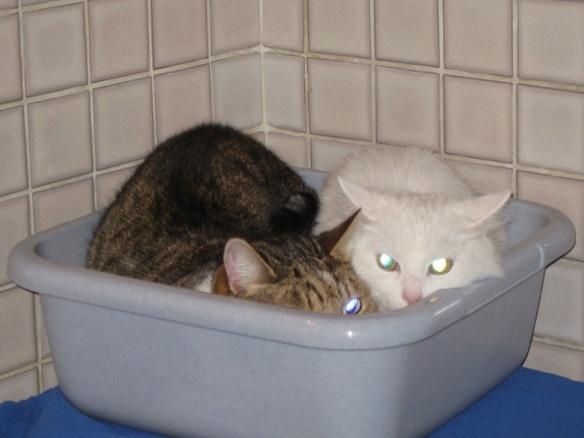 Feige Katzen