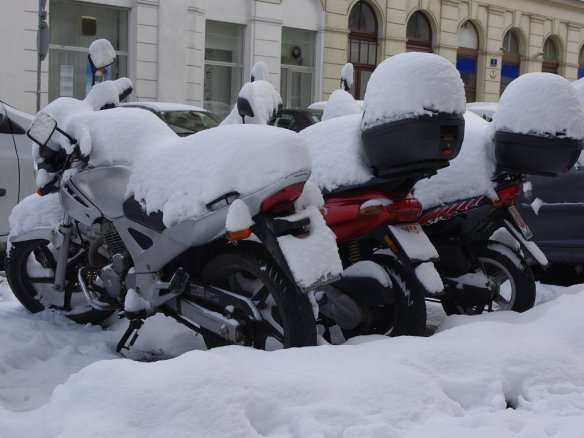 Moppeds im Schnee