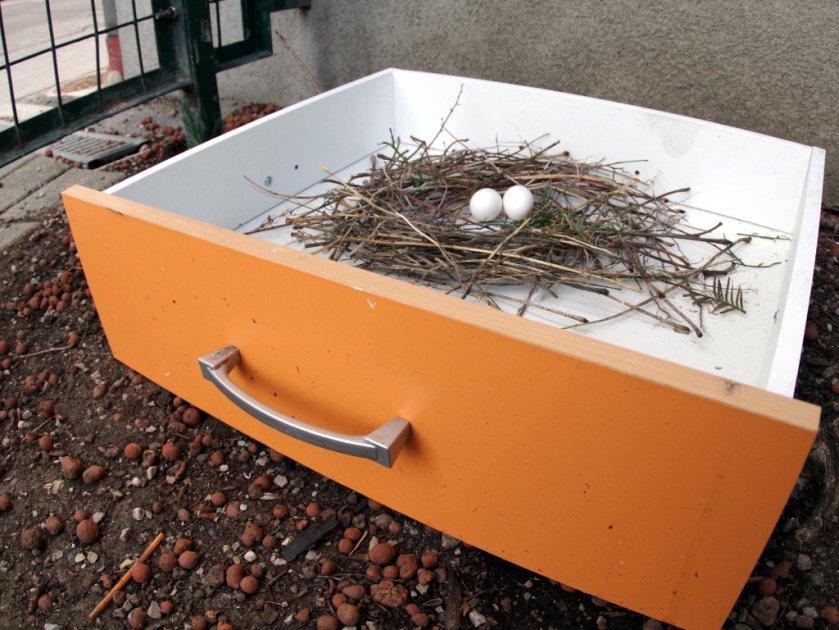 Vogel-Nest-Lade