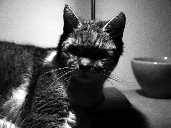Darth-Vaders-Katze